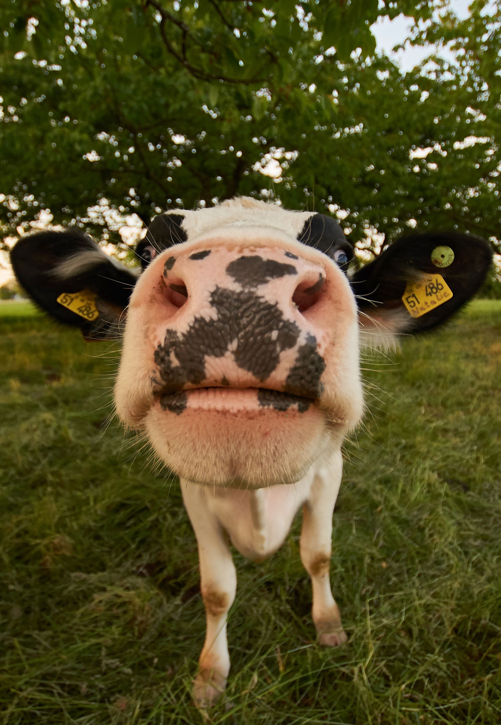 Vache-terre-et-lac
